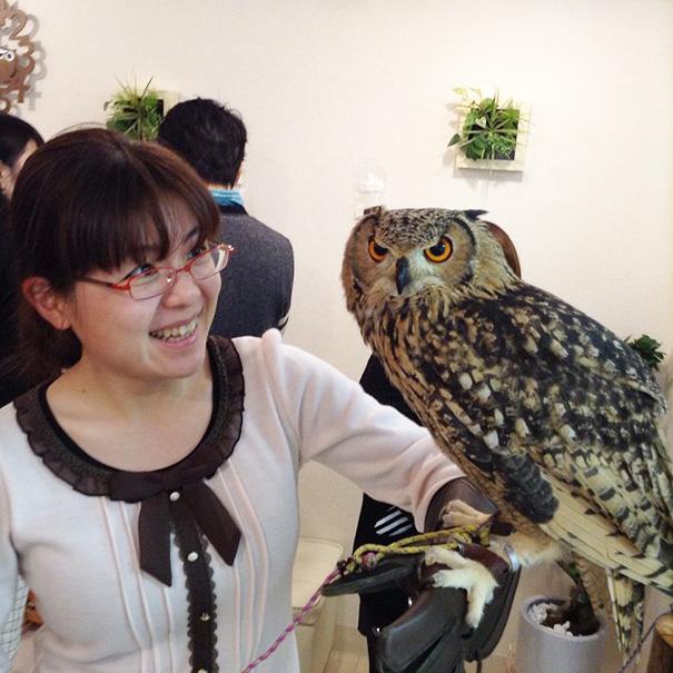 owl-cafe-ikefukuroucafe-tokyo-20