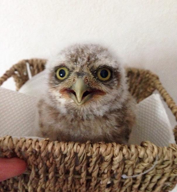 owl-cafe-ikefukuroucafe-tokyo-22