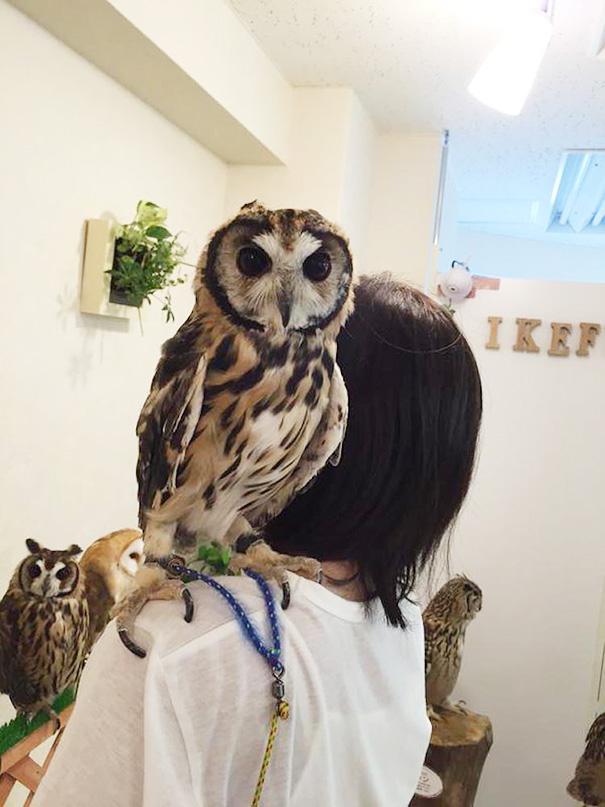 owl-cafe-ikefukuroucafe-tokyo-26