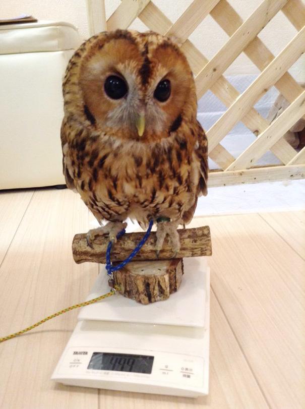 owl-cafe-ikefukuroucafe-tokyo-4