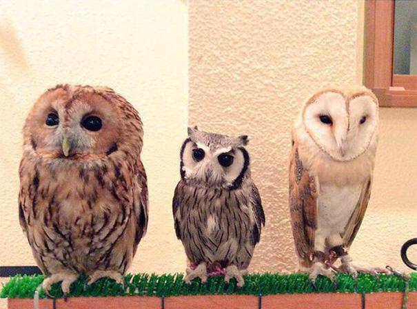 owl-cafe-ikefukuroucafe-tokyo-6