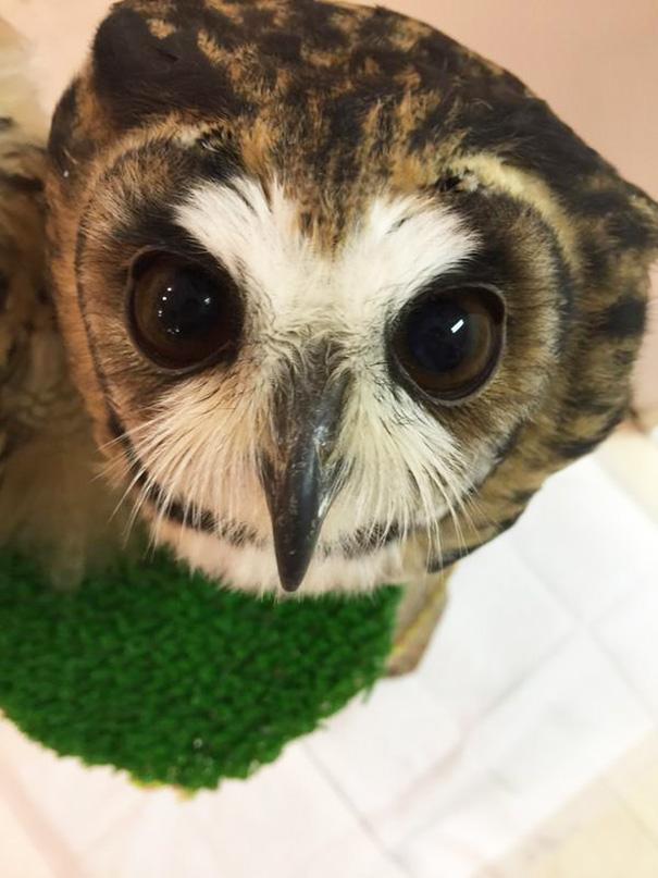 owl-cafe-ikefukuroucafe-tokyo-8
