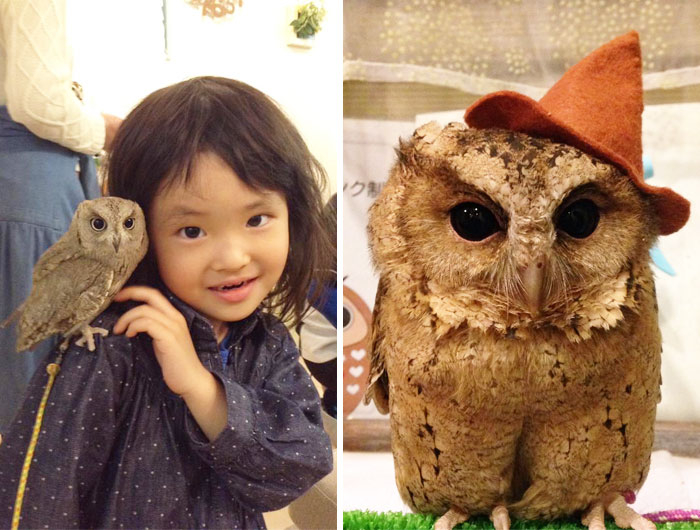 Take A Look Inside One Of Tokyo's Owl Cafes
