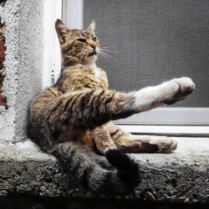 Just Posing