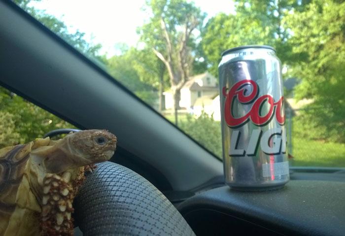 partying-tortoise-wild-night-photos-1