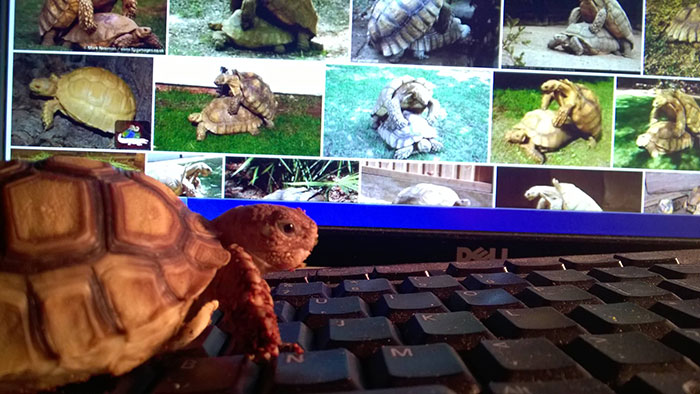 partying-tortoise-wild-night-photos-3