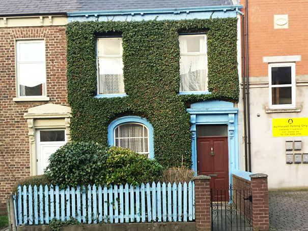 The Neatness Of The Ivy On This House In Belfast