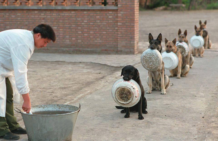 Police Dogs In China Waiting For Food Are Better In Lines Than Most People  | Bored Panda