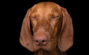 Zen Dogs: Photographer Captures The 'Relaxed' State Of Man's Best Friend