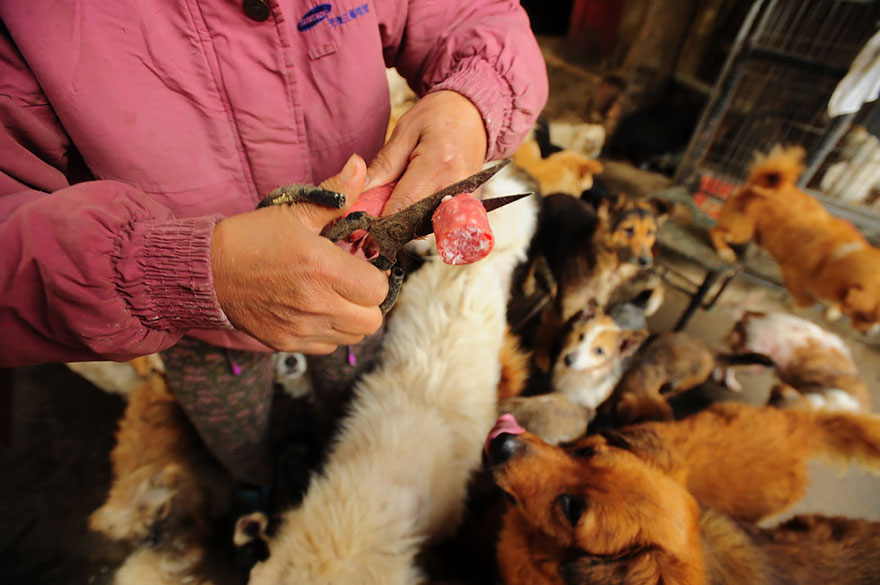 What Can We Do To Save The Yulin Dog Festival