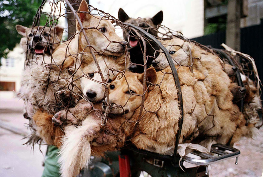 Stop Dog Meat Petition
