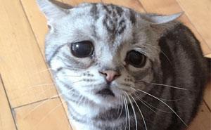 The Saddest Cat On The Internet