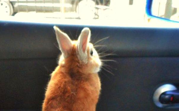 short-people-problems-bunny-koron-japan-11