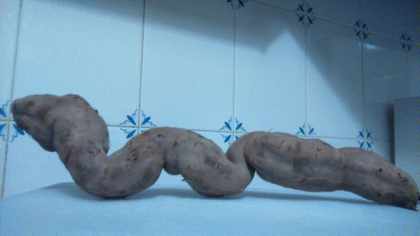 Ssssssssssweet Potatoes Come In All Snakes And Sizes!