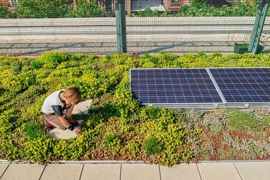 solar-panel-roof-green-schools-nyc-10