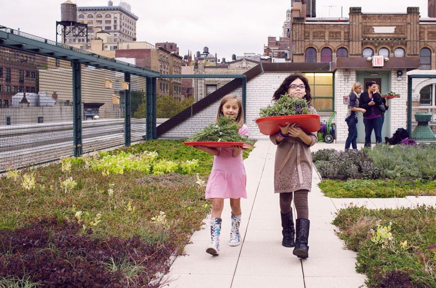solar-panel-roof-green-schools-nyc-2