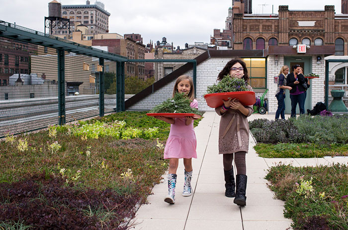 Solar Roofs With Gardens Might Become Part Of NYC School Curriculum