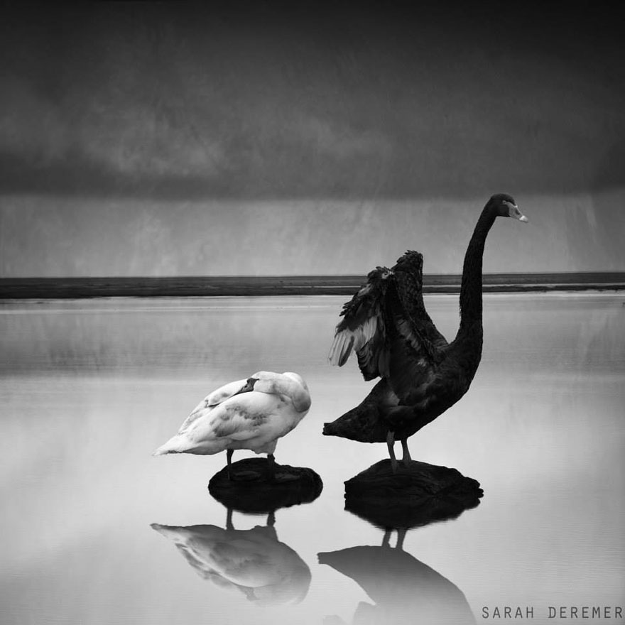 surreal-black-and-white-scenes-sarah-deremer-1