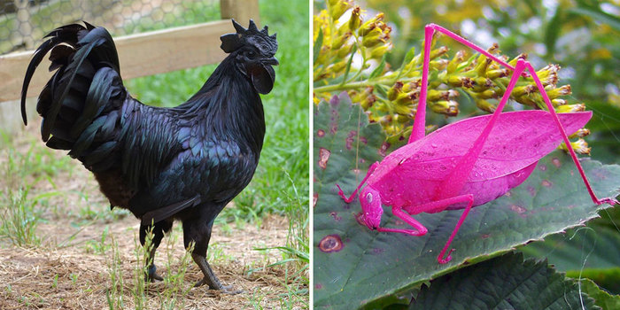 20 Animals With Unexpected Colors  Bored Panda
