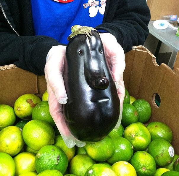 A Long-faced Eggplant