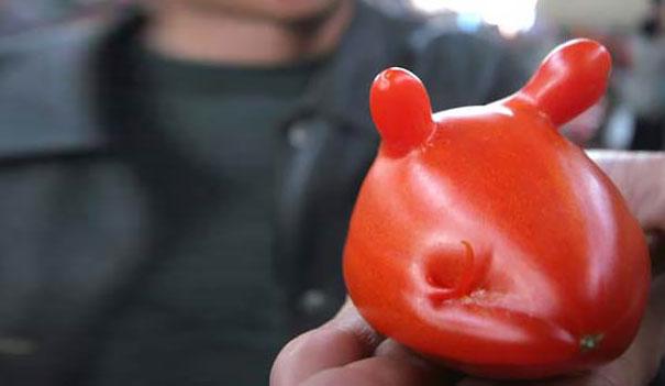 Mouse Tomato