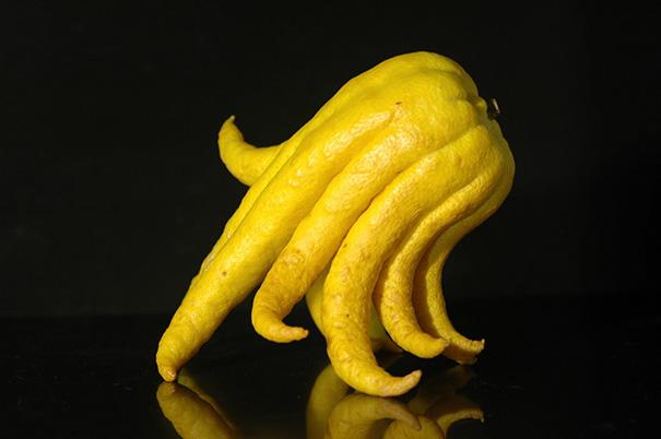I Present To You A Buddha's Hand Fruit