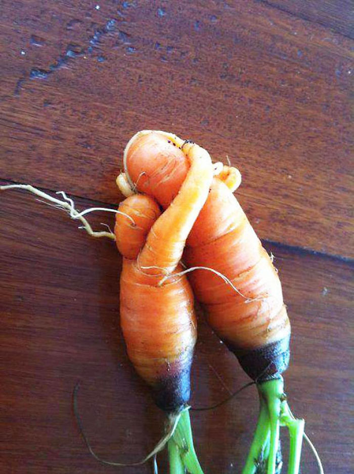 Found These Mother And Child Vegetables Sharing A Moment Together In My Garden