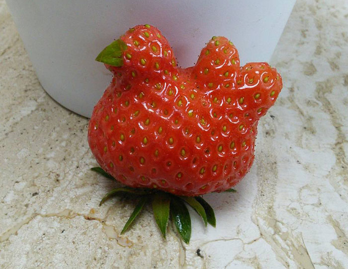 22+ Unusually-Shaped Fruits And Vegetables That Look Like Something Else