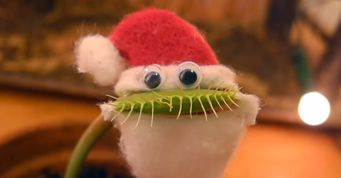 Venus Flytrap Dresses Up As Santa To Wish You A Merry