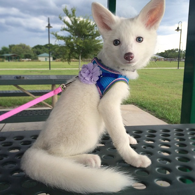 white-fox-cub-rylai-3