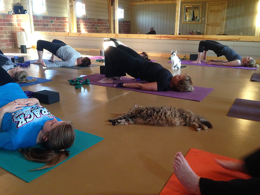 Yoga Studio Invites Shelter Cats To Do Yoga And Helps Them Find Homes