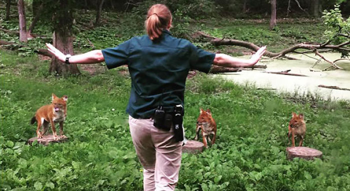 Hilarious Zookeepers Recreate Jurassic World Scene With Non-dinosaurs