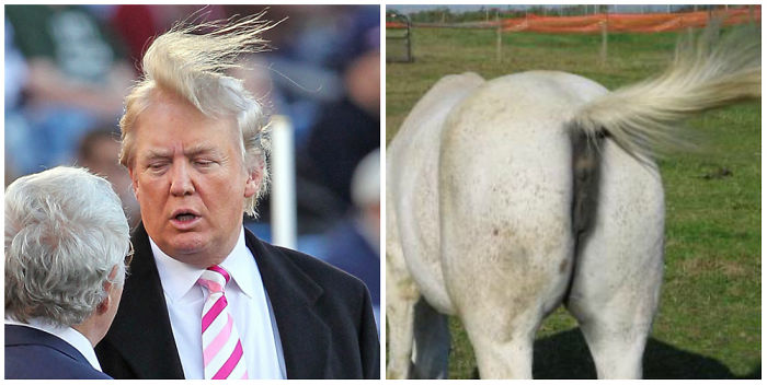 A Donkey's Asshole Looks Like Donald Trump! (no Offense)