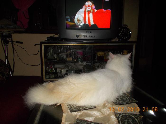 Feline Of Mumbai.