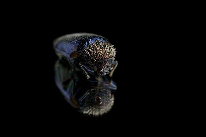 Exotic Beetles Photography