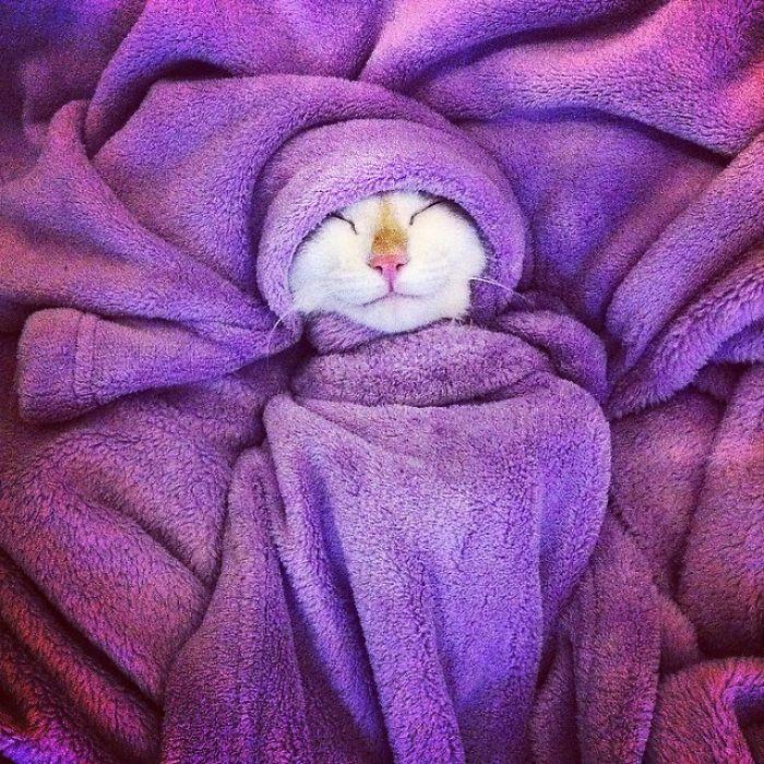 Frida Sleeping In The Winter