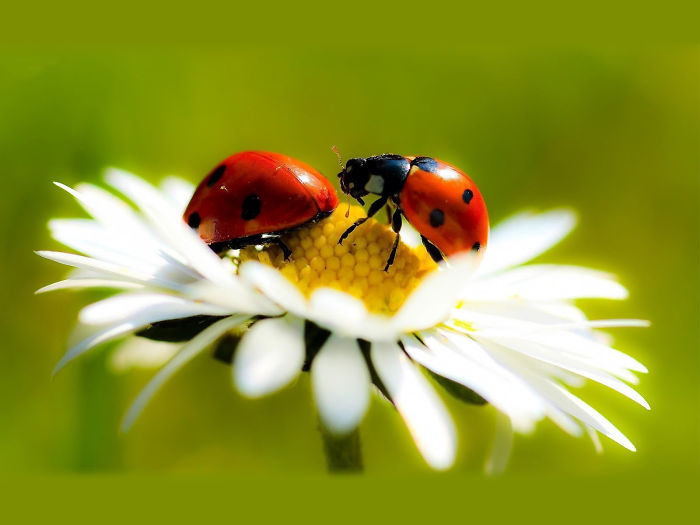 Want To Buy 300 Live Ladybugs For $5?