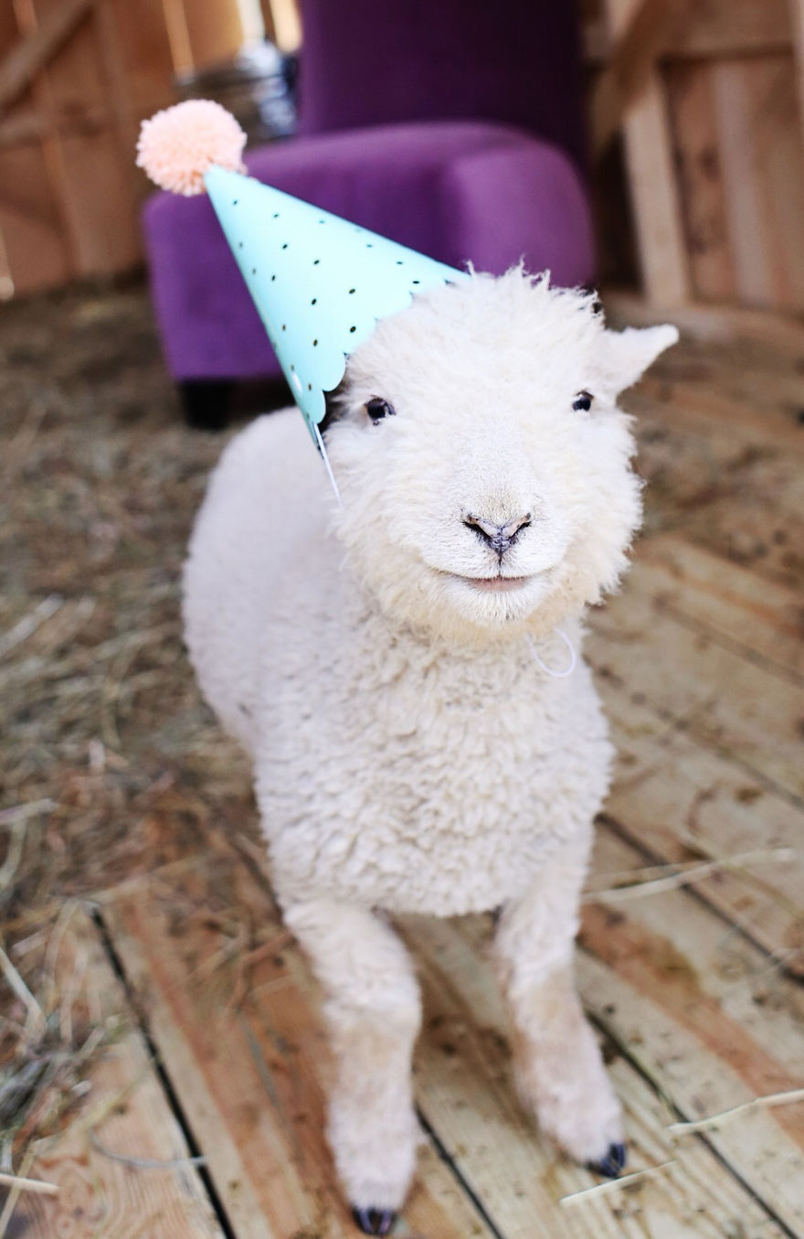animals wearing birthday hats - photo #19