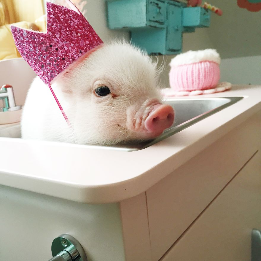 Animals In Hats: I Combined Two Simple Things Into Something Exceptionally Adorable
