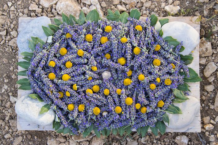 Lavender Art Attracts Bees