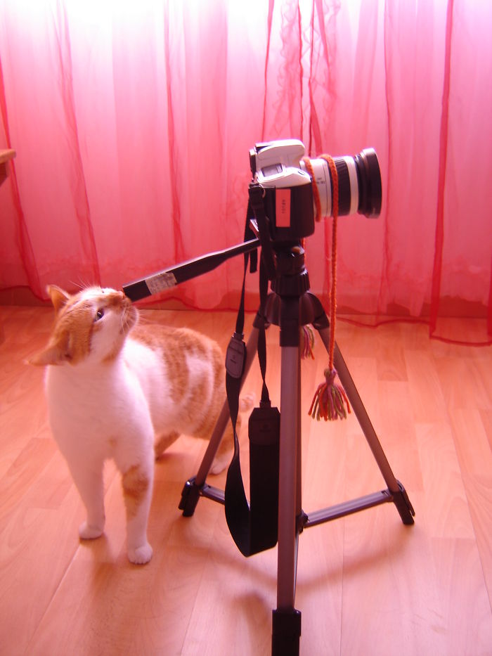 Timon Trying Out Photography