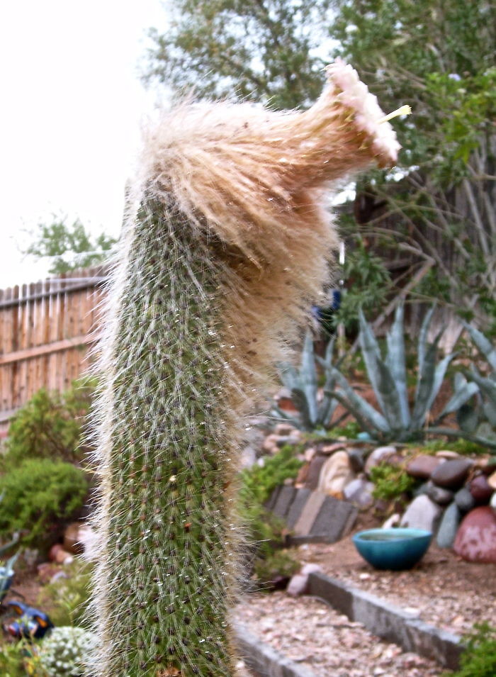 Could This Cactus Be The Love Child Of Donald Trump And Q*bert?