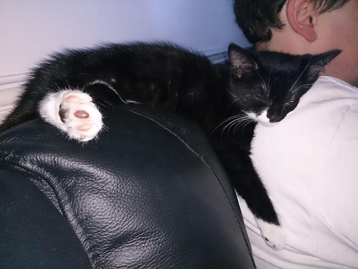 Pippa Kitten Dozing