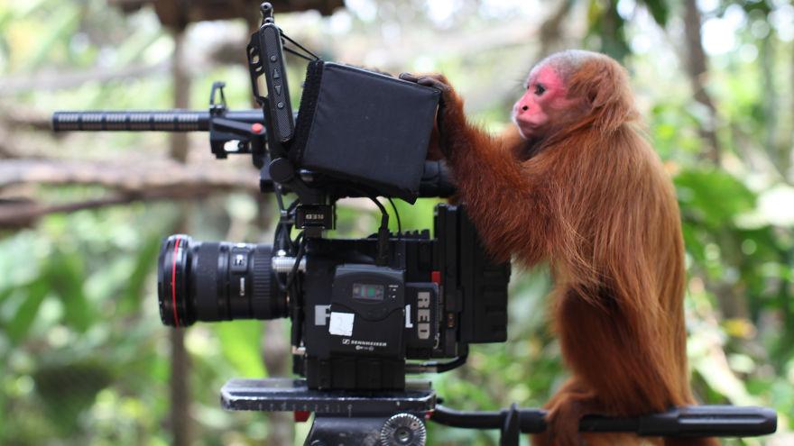 Yohomedia.com - Our Peruvian Cameraman