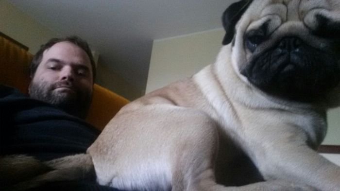 Monster Pug On The Couch
