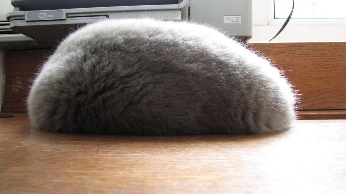 Believe Me, It's Not A Fur Hat.