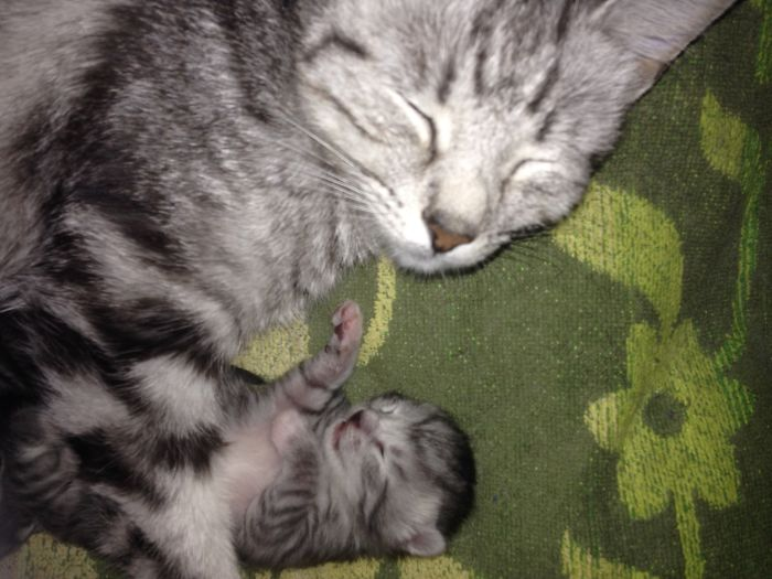 Worn Out New Mother.