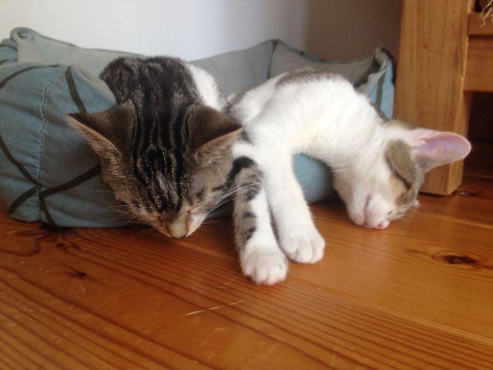 Fluid Kitties