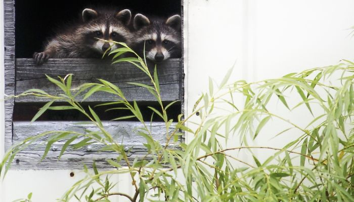 Our New Unexpected Neighbors Moved To An Abandoned House