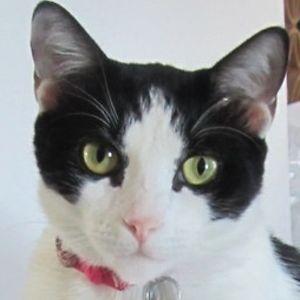 Lily Mae Kitty